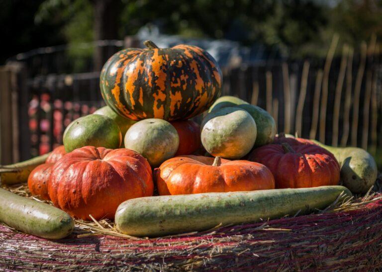 11 DIY Thanksgiving Decorations & Crafts
