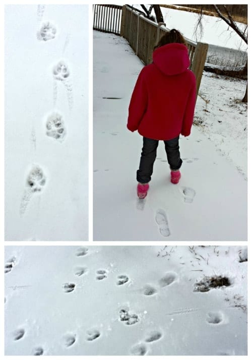 Fun Activities for the Kids to Do in the Snow: Find and Identify Animal Tracks