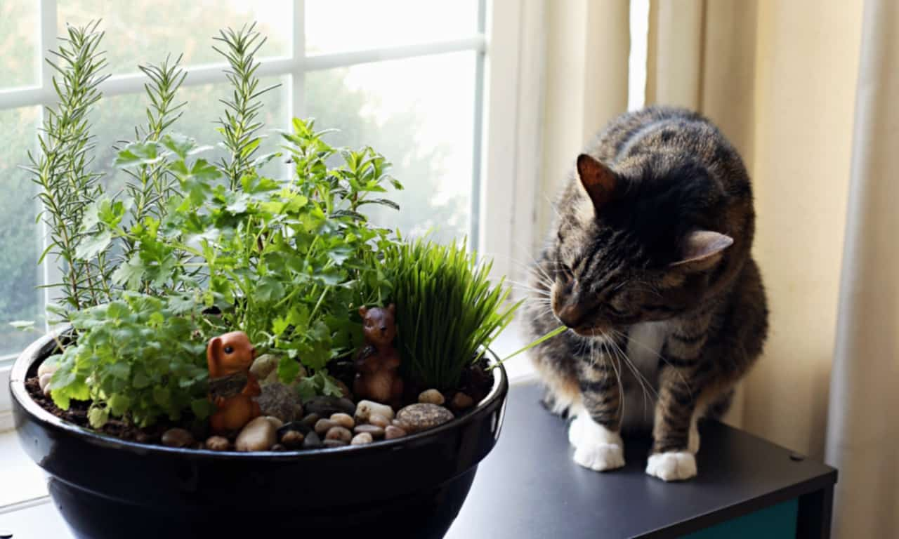 How to make an amazing diy indoor cat garden the anti for Dog safe houseplants