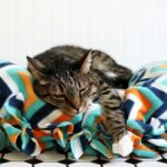8 Ways to Keep Your Cat Happy and Healthy Plus a DIY No-Sew Cat Bed