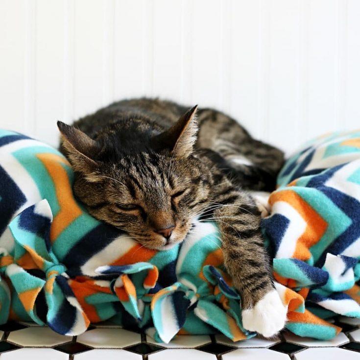 DIY No-Sew Cat Bed