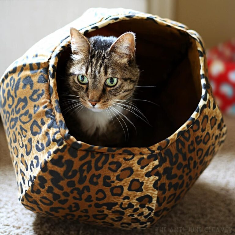 The Coziest Place for Your Cat to Nap