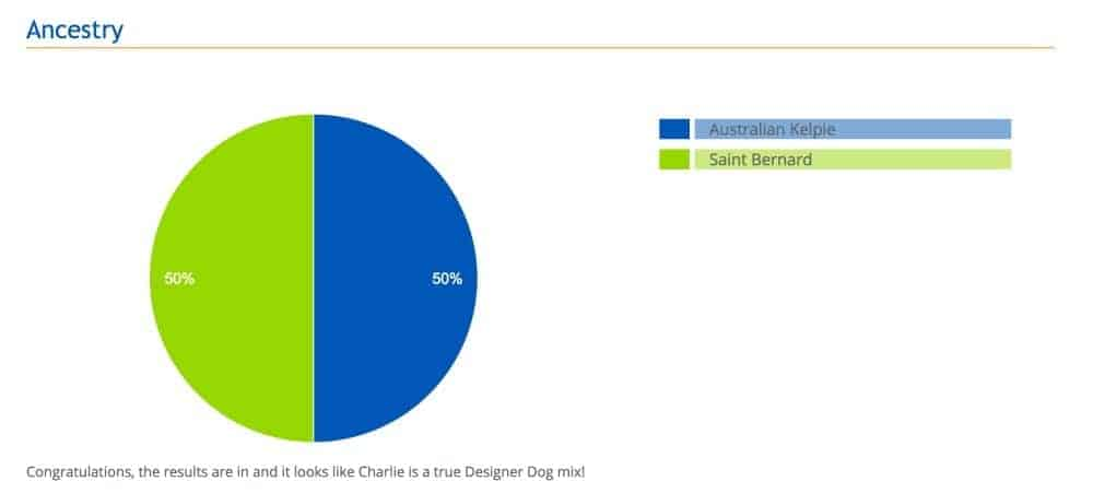 What kind of dog do I have? My Wisdom Panel dog DNA analysis review