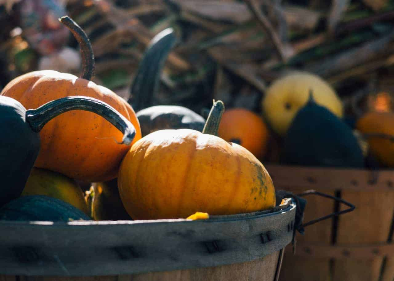 Get your home ready for fall, halloween, or thanksgiving with these 14 gorgeous DIY farmhouse decor ideas (roundup)