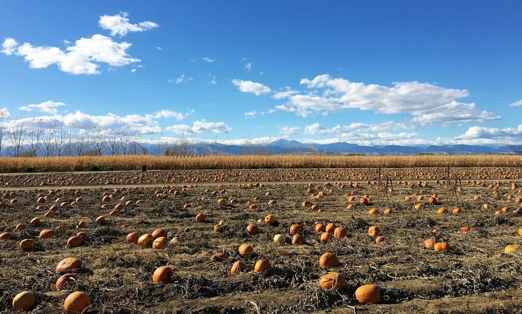 Our Fall Tradition: Anderson Farms pumpkin patch in Erie, Colorado