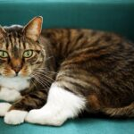 5 Good Reasons to Adopt an Adult Cat