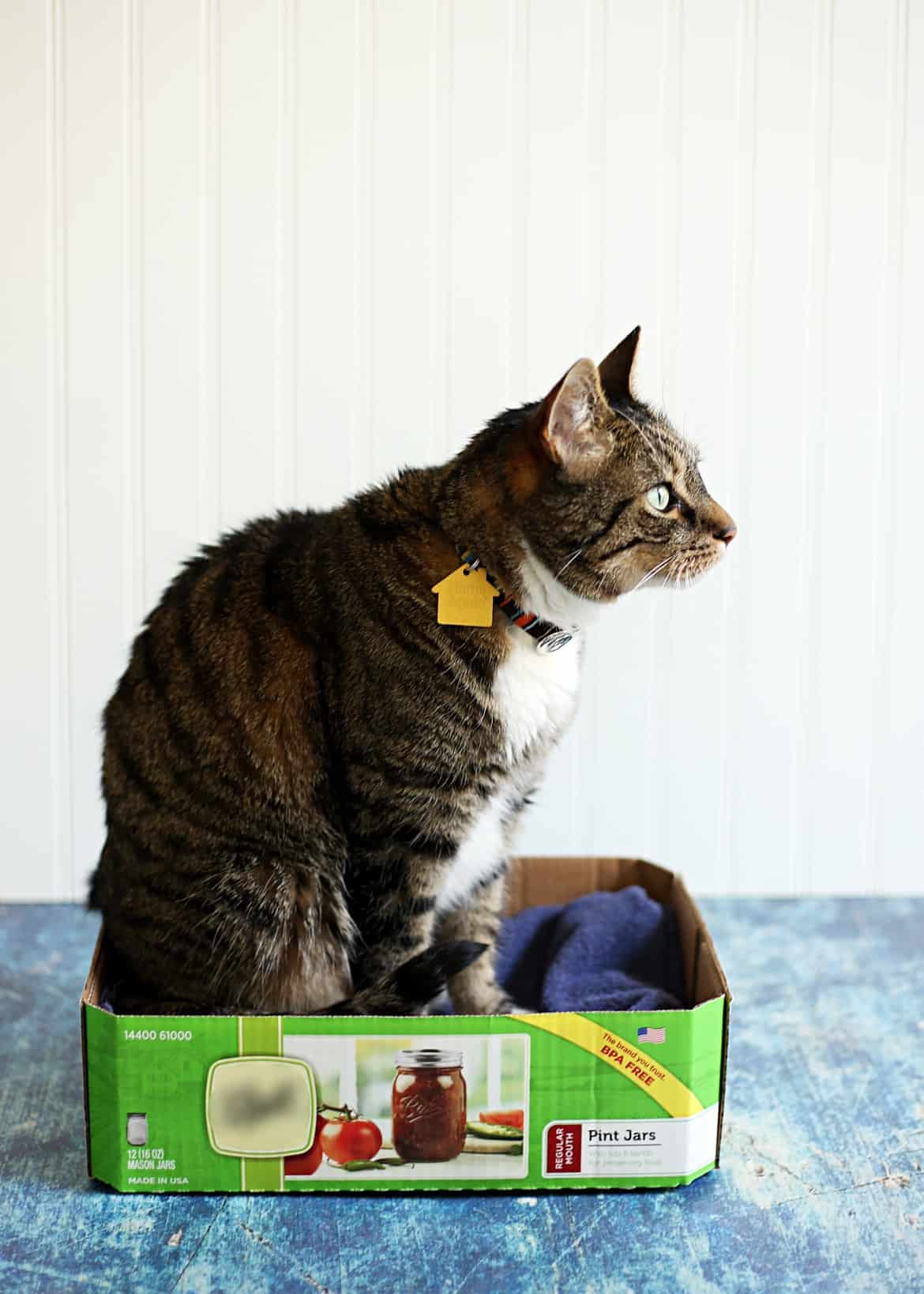 How You and Your Kids Can Help Shelter Cats (AD) #LitterForGood #CatsPride #cats #shelterpets #adoptdontshop