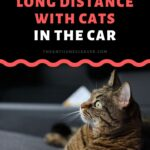 How to Move Long Distance in a Car with Cats