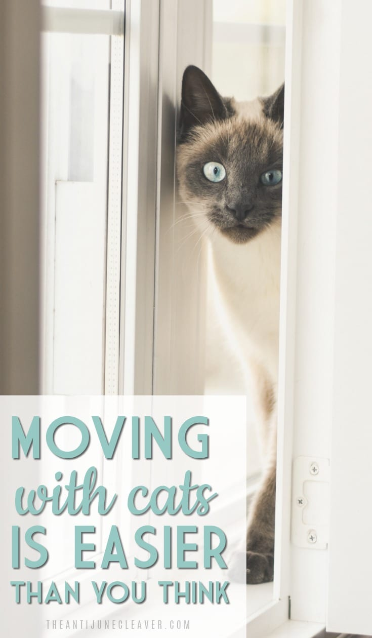 How to Move Long Distance with Cats #moving #travel #cats #movingwithcats #travelwithcats