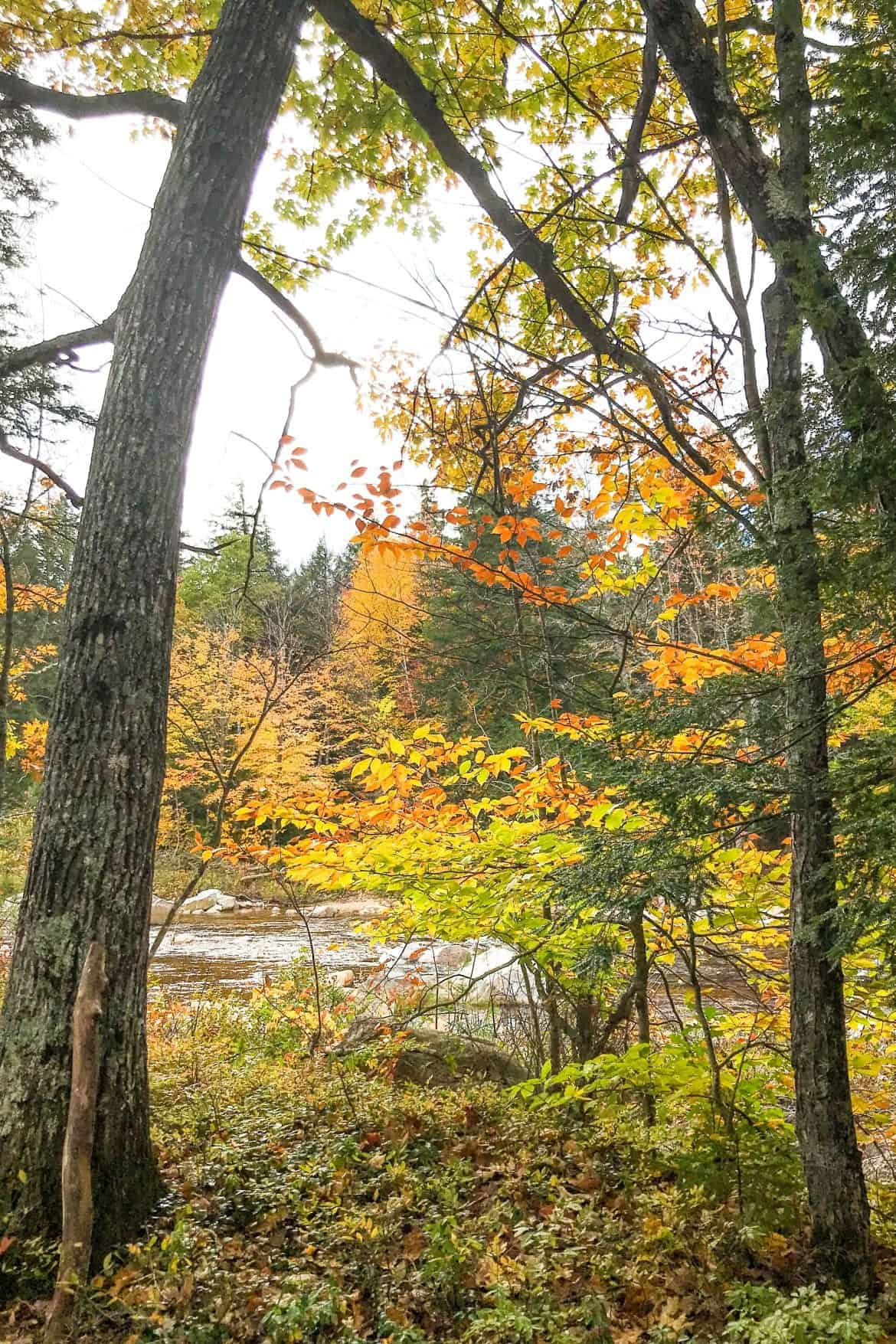 A Drive Through the White Mountain National Forest | The Kancamagus Highway #newhampshire #newengland #newenglandtravel #autumn #kancamagushighway #whitemountains #travel #roadtrip