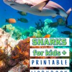 Shark fun facts for kids