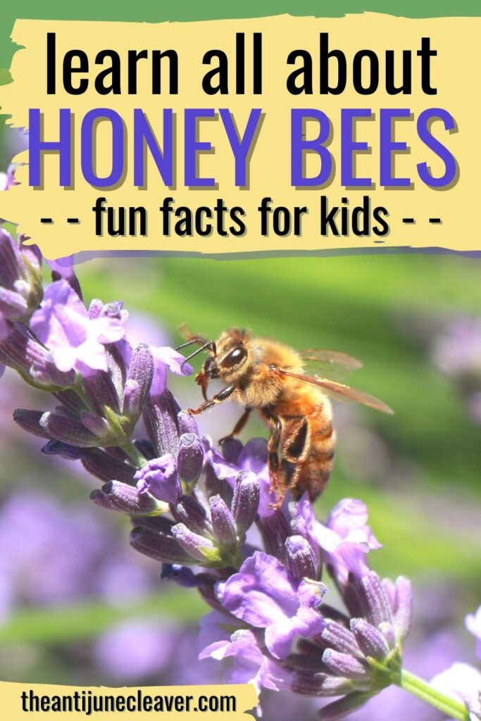 About honey bees for kids