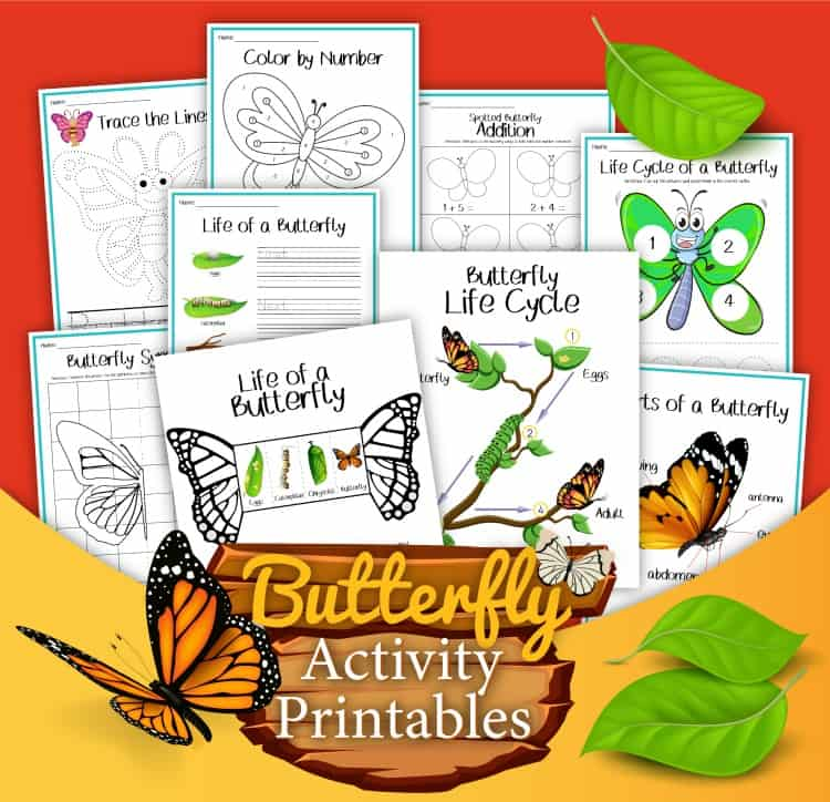Butterfly activity printable worksheets