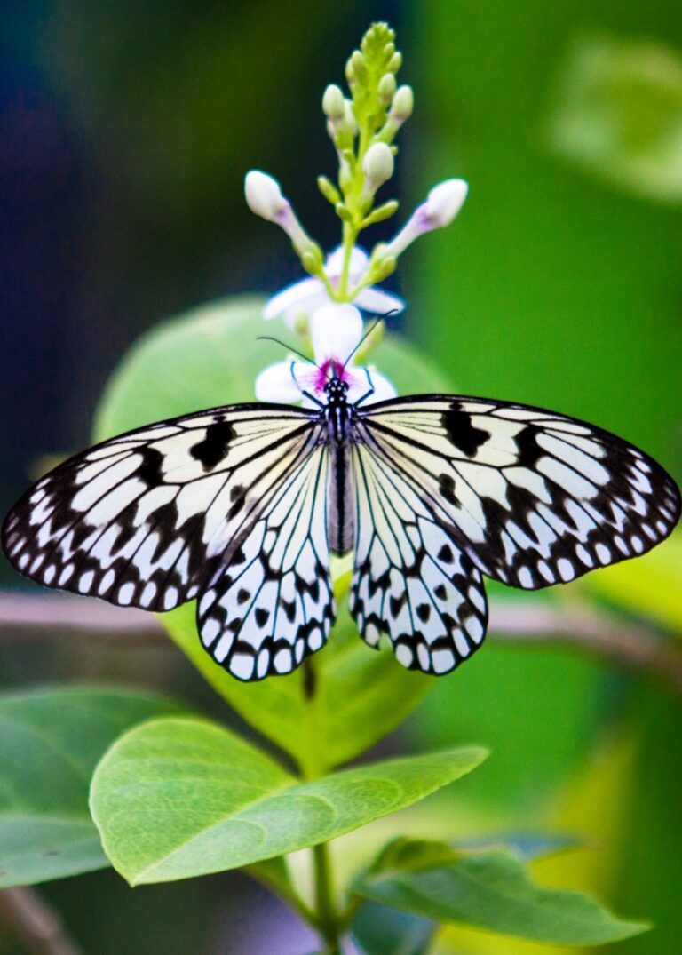 Fascinating Facts About Butterflies for Kids + Printable Activity Worksheets