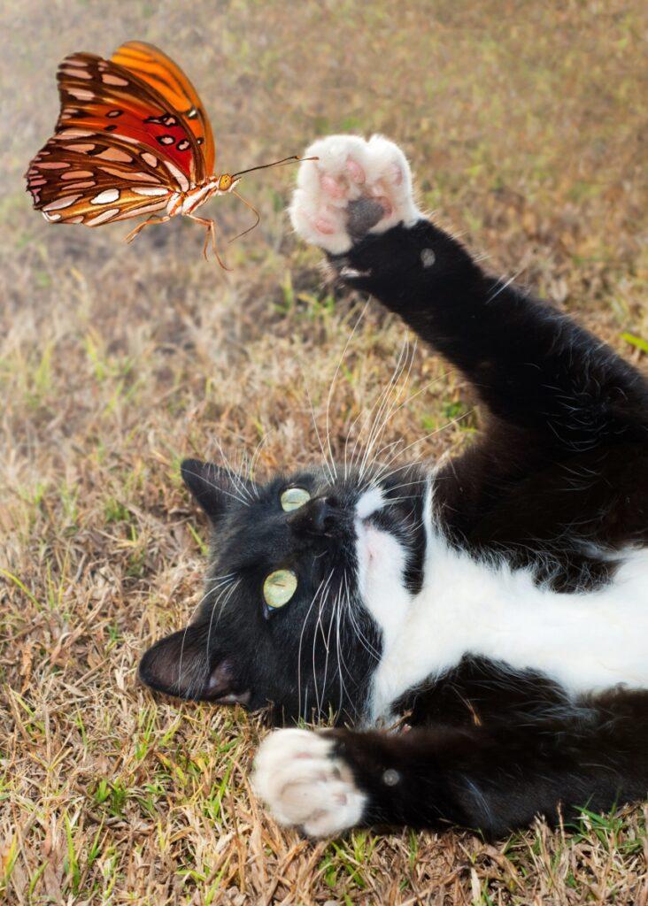 butterfly predator